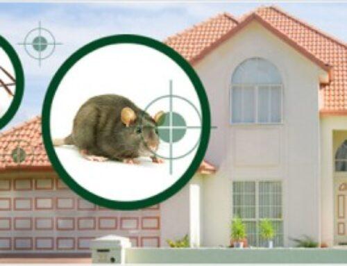 شركة مكافحة حشرات في دبي |0504715040 |مكافحة حشرات