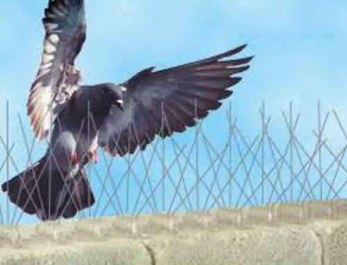 شركة مكافحة الحمام ام القيوين |0504715040 |مكافحة الطيور